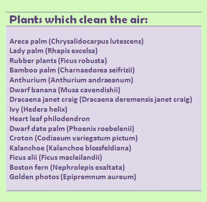 Air Purifying House Plants Feng Shui Air Purifying Plants