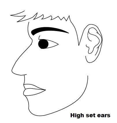 Face Reading – Ear Size, Shapes and Meanings | Long and