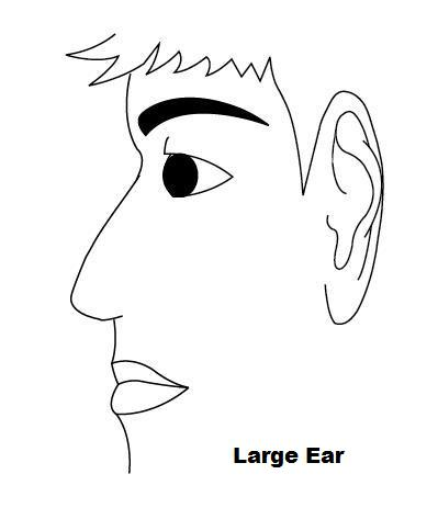 Face Reading – Ear Size, Shapes and Meanings | Long and Short Ears, Vulcan  Ears, High and Low Set Ears